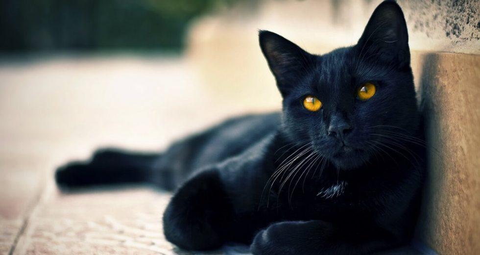 Mơ Thấy Mèo Đen Đánh Con Gì? – Điềm Báo Gì?